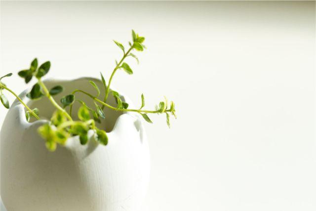 小さな容器に植えられた植物